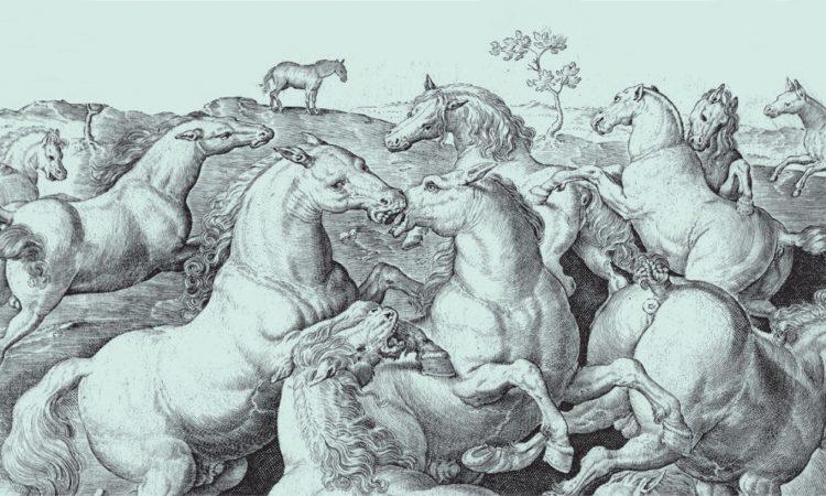 Il Cavallo: 4'000 anni di storia