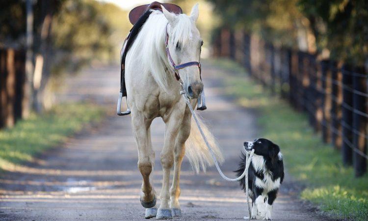 Jump Horse & Dog e Caprilli Test