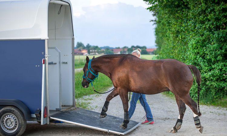 Trasporto cavalli all'estero